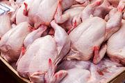 مرغ تنها در تهران گران است / قیمت جوجه یک روزه ۲ برابر شده است