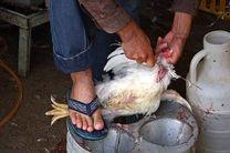 192 واحد عرضه و کشتار غیرمجاز مرغ زنده در کرمانشاه پلمب شده است