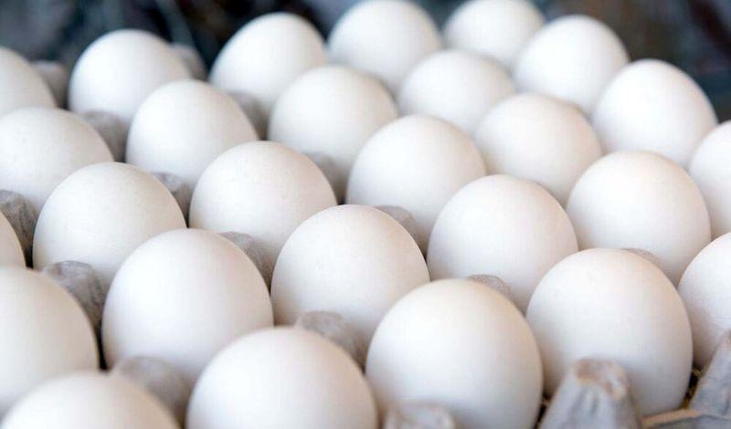افزایش قیمت خوراک دام لیل گرانی قیمت تخم مرغ در بازار اصفهان