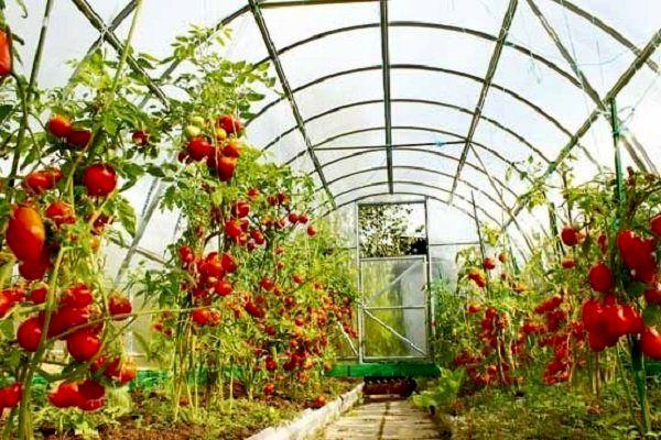۲۰ پروژه شاخص کشاورزی در اصفهان افتتاح می شود