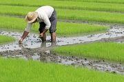 نفوذ آبهای شور با حفر چاههای غیرمجاز در زمینهای کشاورزی مازندران