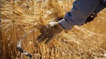 حق گندم کاران در دستان شورای اقتصاد گره کور خورده / بلاتکلیفی کشاورزان همچنان ادامه دارد