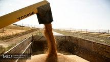۵میلیون تن گندم در سال 97 از کشاورزان خریداری شده است