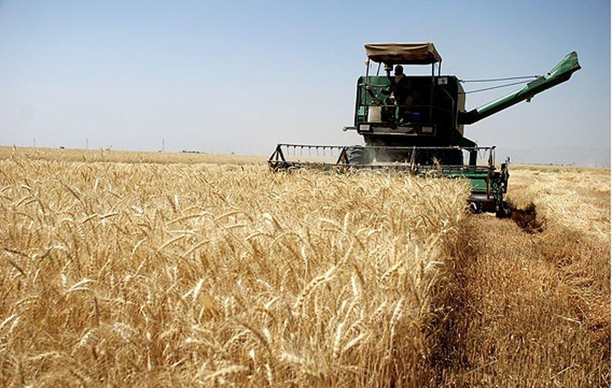 خسارت ۶۰۰ میلیارد ریال خشکسالی به گندمکاران جوینی