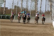 هفته سوم مسابقات اسبدوانی تابستانه کشور در بندرترکمن برگزار شد