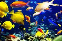 افزایش 20 درصدی تولید ماهیان زینتی در کاشان در مقایسه با سال گذشته