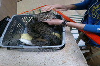 شرایط ورود و خروج حیوانات خانگی همراه مسافر