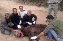 علت خشمگین بودن خرس صالح آباد کلاله