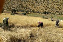 برداشت ۹۲ هزار تن گندم از ۴۵ هزار هکتار زمین کشاورزی در اسلامآباد غرب