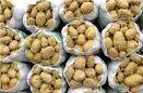 نیمی از صادرات سیبزمینی کشور به عراق انجام شد