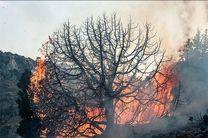 گرمای شدید هوا و سهلانگاری عامل انسانی بیشترین عامل آتش سوزی مناطق جنگلی