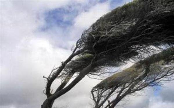 پیش بینی وزش باد نسبتا شدید در پایتخت