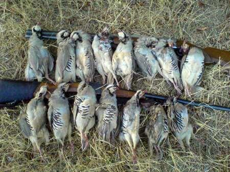 دستگیری یک متخلف شکار همراه با اسلحه قاچاق در برزک  کاشان