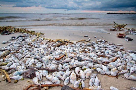 ورود مدعی العموم به پرونده مرگ ماهیها در زرینه رود