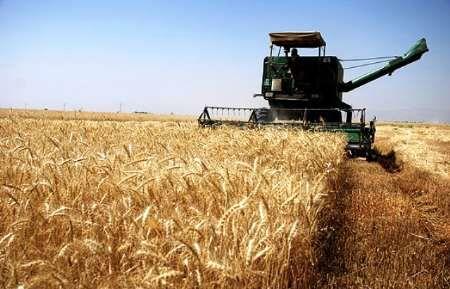 آخرین وضعیت خرید گندم از کشاورزان لرستانی