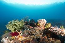 برگزاری نخستین همایش ملی تغییر اقلیم و اکوسیستم های آبی در هرمزگان