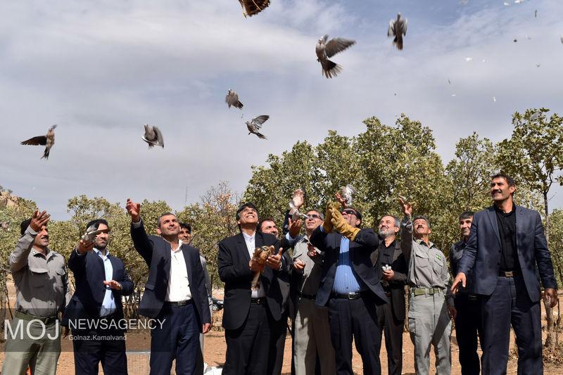 آئین رهاسازی پرندگان وحشی مکشوفه از قاچاقچیان با حضور استاندار لرستان برگزار شد