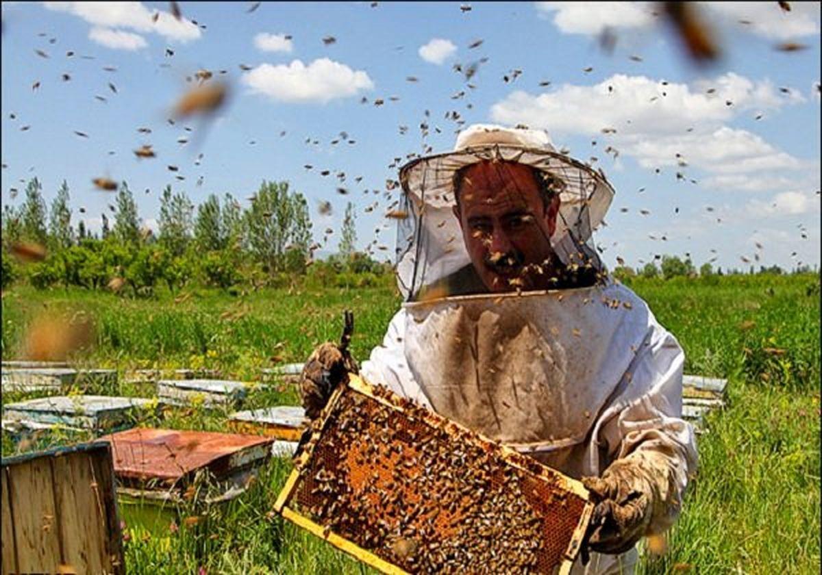 وجود بیش از 455 هزار کندو کلنی زنبور عسل در اردبیل