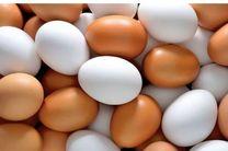 هنوز به قیمت منطقی 12 هزار و 600 تومان برای هر شانه تخم مرغ نرسیده ایم/ واردات تخم مرغ همچنان ادامه دارد