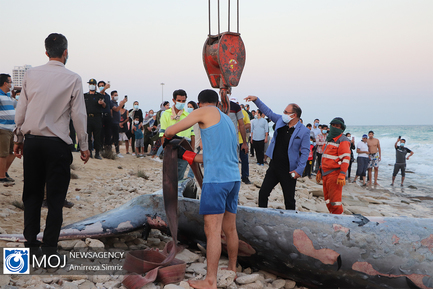 نهنگ مرده در سواحل شرقی جزیره کیش