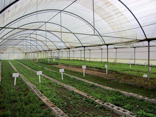 کاهش 80 درصدی مصرف آب در کشت های گلخانه ای