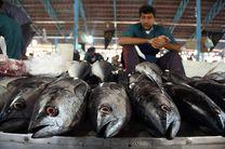 توزیع گوشت تا رسیدن بازار به تعادل ادامه یابد/قیمت ماهی در هرمزگان رضایت بخش نیست
