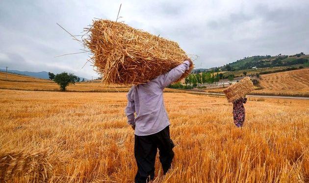 نوسانات ارز دلیل تعویق صادرات آرد ایرانی