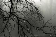 پیش بینی بارش های رگباری در استان تهران