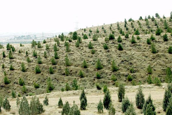 ۱۰۰۰ هکتار طرح جنگل کاری بنیاد برکت فردا بهره برداری می شود