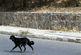 پرسه سگهای ولگرد در خیابانهای خرمآباد/چه کسی مسوول است ؟!