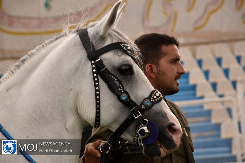 اولین همایش گردشگری اسب به میزبانی یزد برگزار می شود