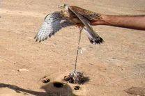 متخلف زنده گیری پرندگان شکاری در گلپایگان دستگیر شد