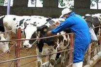 اجرای فاز نخست واکسیناسیون دام های مازندران علیه بیماری تب برفکی