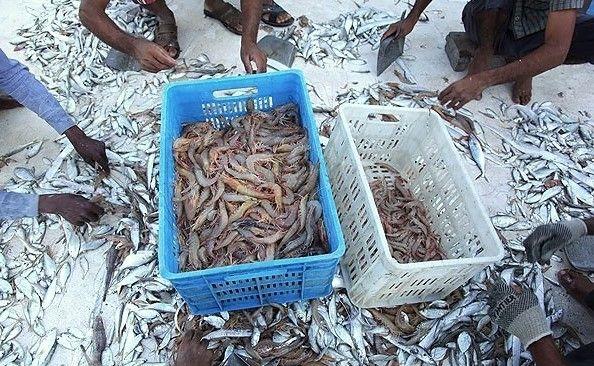 محصولات دریایی هرمزگان برای دنیا قابل قبول است