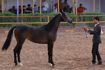ساخت اولین مرکز تشخیص بیماریهای اسب کشور در آق قلا با 40 درصد پیشرفت فیزیکی