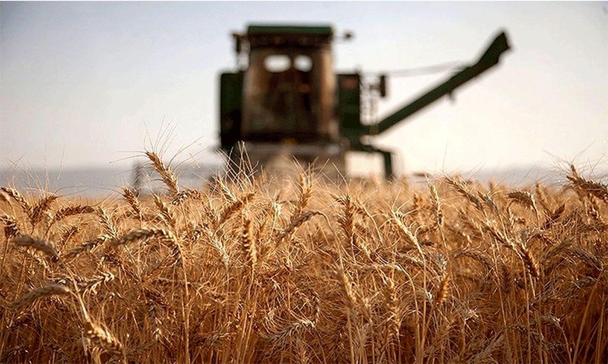 آغاز خرید ۱۴ هزار تن گندم از کشاورزان شرق خراسان رضوی