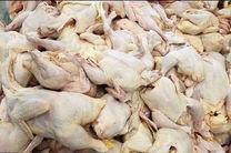 ۴۵۰ تن گوشت مرغ در مازندران توزیع شده است