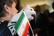 پیش بینی گربه پیشگو روسی از بازی مراکش و پرتغال