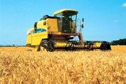 کاهش 65 درصدی تولید گندم در استان اصفهان