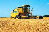 پیش بینی برداشت 5 تا ۶ تن گندم در هر هکتار از مزارع استان اصفهان