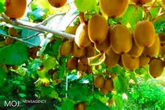 سند توسعه مرکبات و کیوی در مازندران تدوین شده است