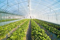 ضرورت اجرای طرح های نوین کشاورزی با علم روز