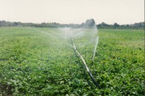 سهام شرکتهای وابسته به جهاد کشاورزی به ایثارگران واگذار میشود