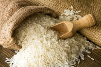 ورود برنجهای وارداتی در شمال ممنوع