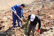 دست های عاشقی که در یک هفته هزاران درخت  کاشتند / مردم نشان دادند که اداره منابع طبیعی در قلوب مهربان آنان است