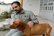 پیگیری لوایح حمایت از محیطبانان و مقابله با حیوانآزاری