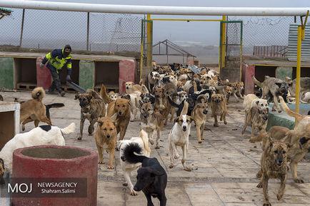 پناهگاه+سگ+های+ولگرد+در+مرکز+وفا (2)