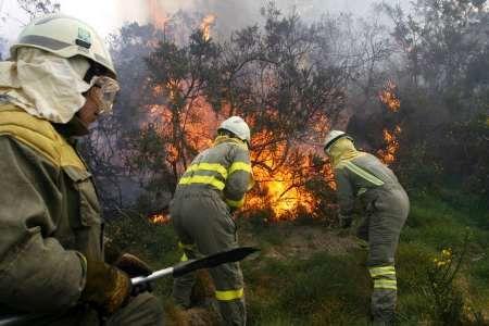 آتش هزاران هکتار از زمین های جنگل سیبری را نابود کرد