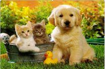 هرآنچه که برای مراقبت حیوانات خانگی نیاز دارید