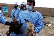 شناسایی اولین کانون ویروس آنفلونزای فوق حاد پرندگان در یاسوج